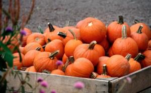pumpkins1 (1)
